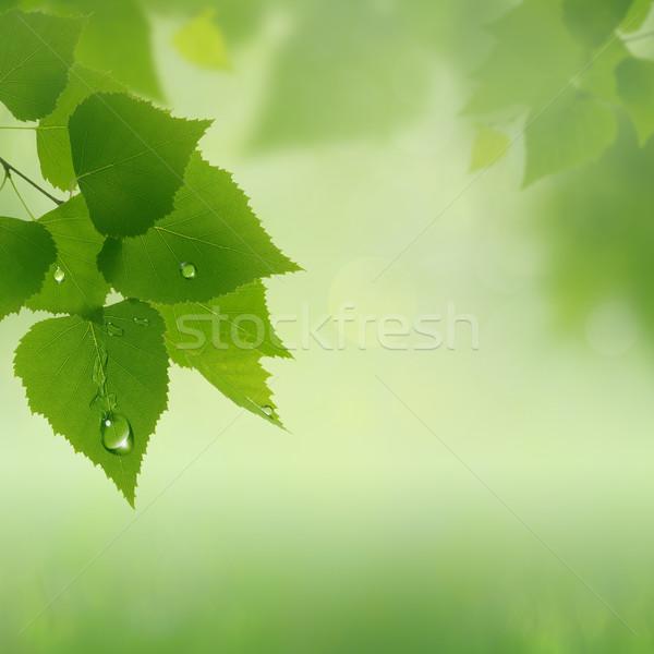 Verde verão abstrato naturalismo fundos céu Foto stock © tolokonov