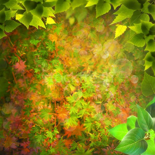 Varázslatos erdő absztrakt természetes hátterek terv Stock fotó © tolokonov