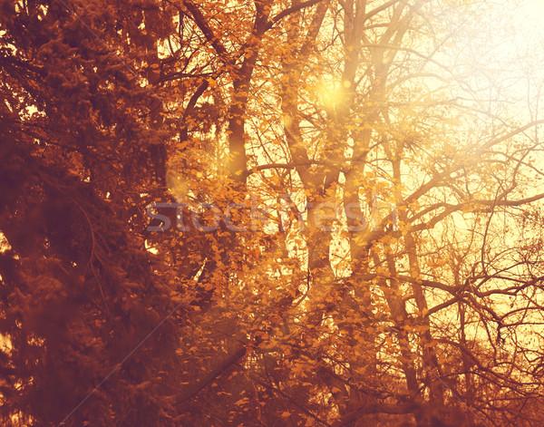 Puslu orman soyut sonbahar arka dizayn Stok fotoğraf © tolokonov