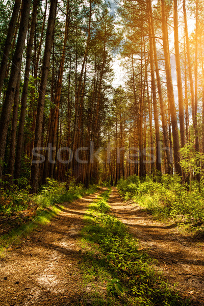 Summer in the forest, abstract natural landscape for your design Stock photo © tolokonov