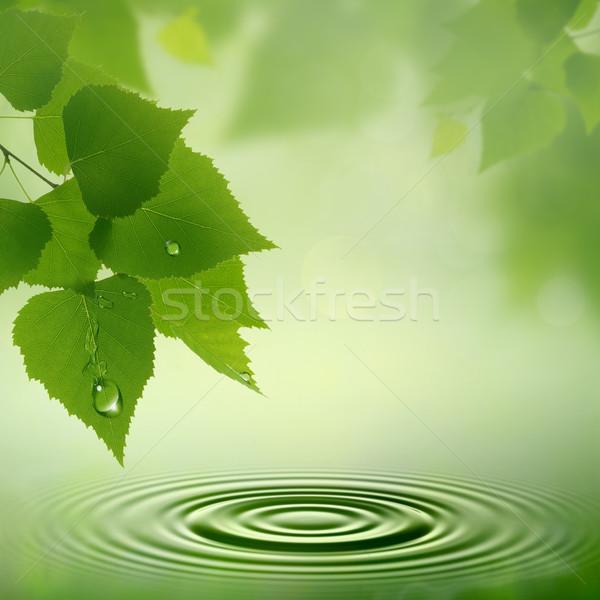 Sabah çiy soyut doğal arka dizayn Stok fotoğraf © tolokonov