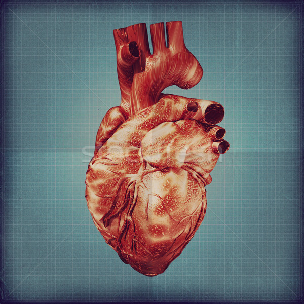 Human heart vintage blueprint. Grunge medical backgrounds Stock photo © tolokonov