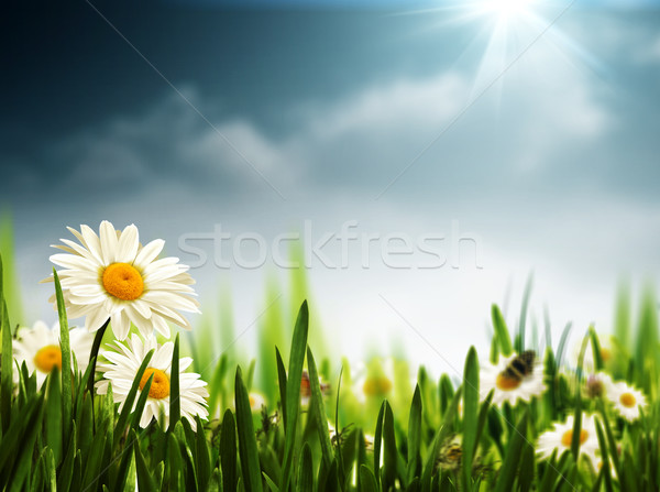Bright summer afternoon. Natural backgrounds  Stock photo © tolokonov