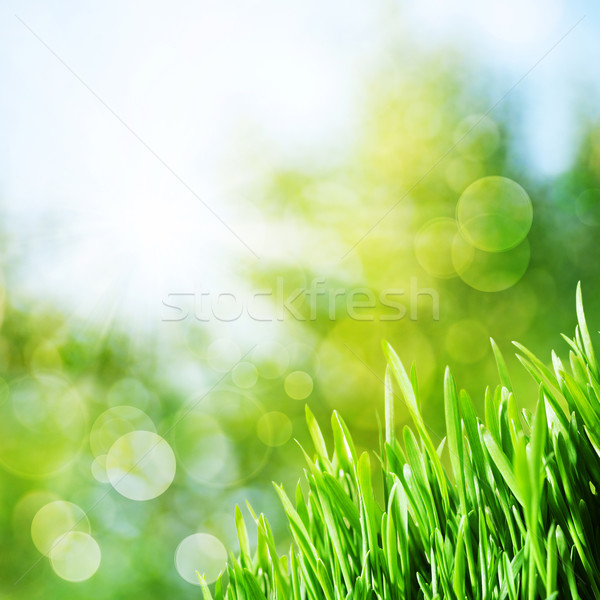 Abstract natural backgrounds with green grass and beauty bokeh Stock photo © tolokonov