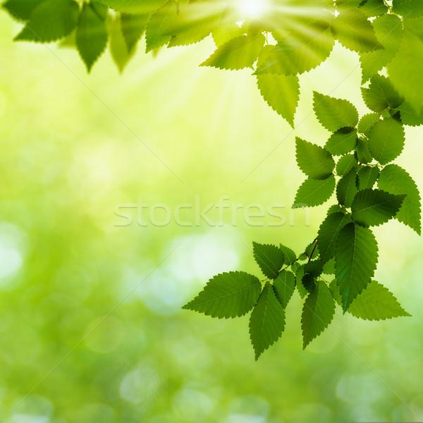 Verano día forestales resumen naturales fondos Foto stock © tolokonov