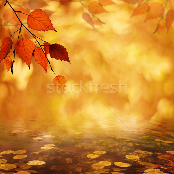 Abstract autumnal backgrounds with petzval lens bokeh Stock photo © tolokonov