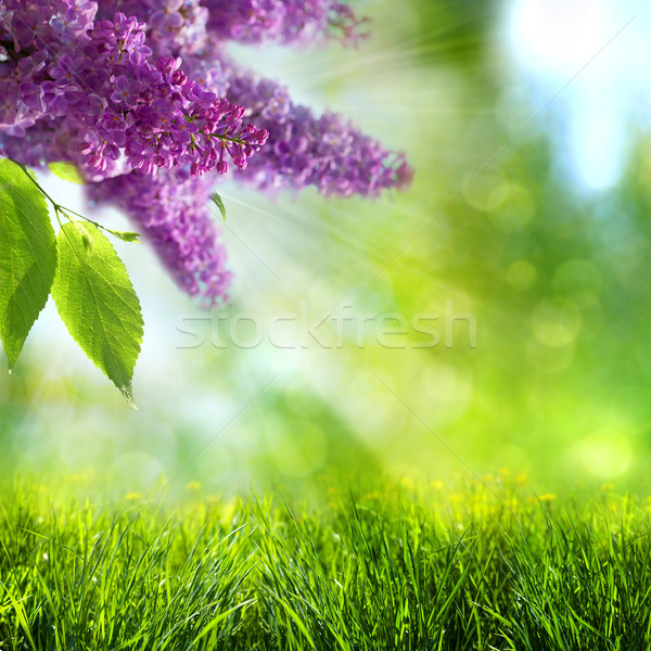 Abstract summer and spring backgrounds with lilac tree Stock photo © tolokonov
