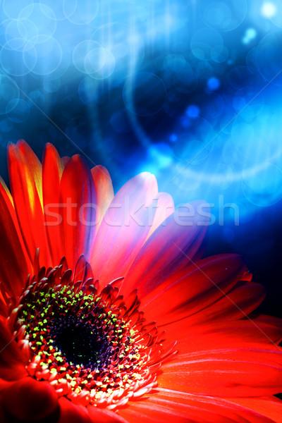 Resumen verano fondos flor sol naturaleza Foto stock © tolokonov