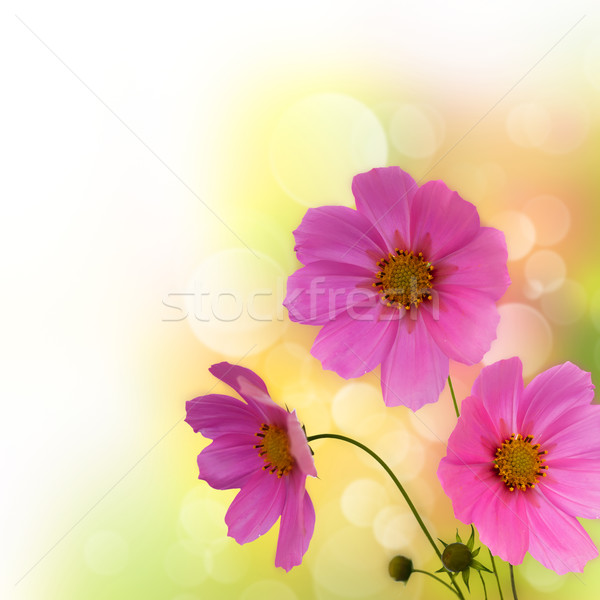Abstract violet flowers border over white for your design Stock photo © tolokonov