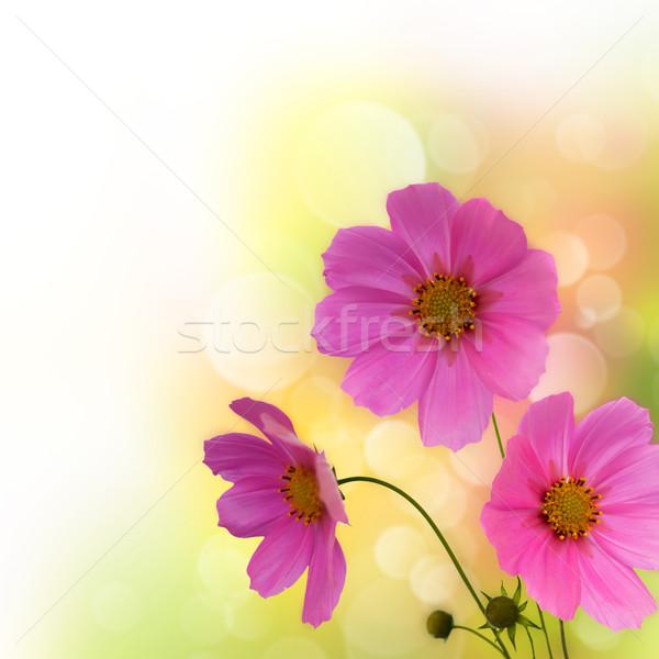 Resumen violeta flores frontera blanco diseno Foto stock © tolokonov