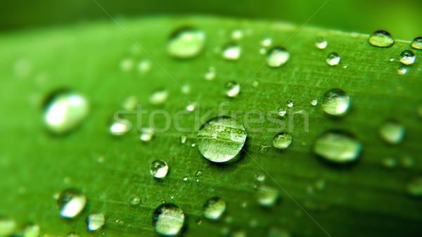 Manhã orvalho abstrato naturalismo fundos textura Foto stock © tolokonov