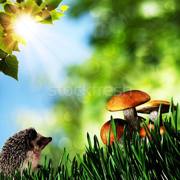 été beauté jour forêt naturelles horizons Photo stock © tolokonov
