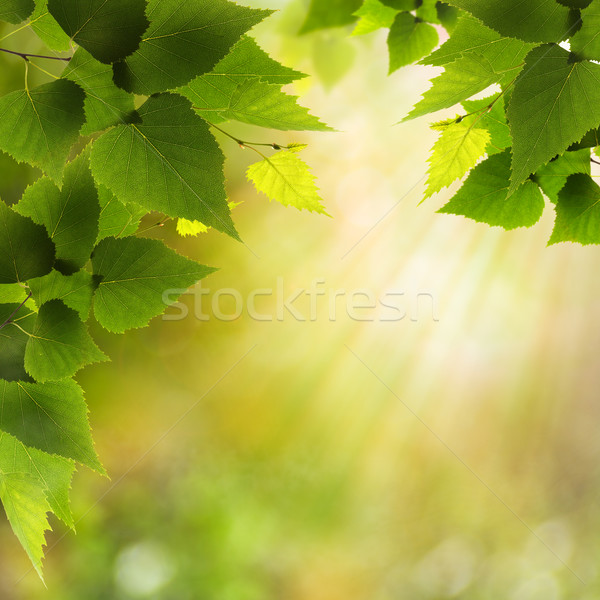 Foto d'archivio: Sereno · mattina · foresta · bellezza · naturale · sfondi