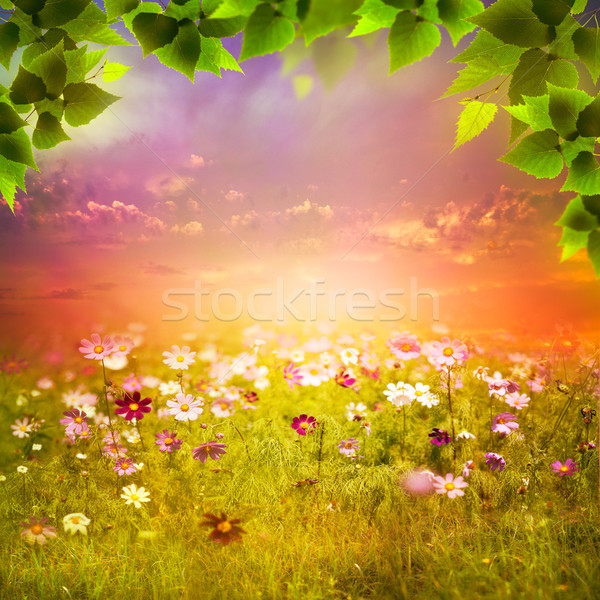 Mystical evening on the meadow. Abstract natural backgrounds for Stock photo © tolokonov
