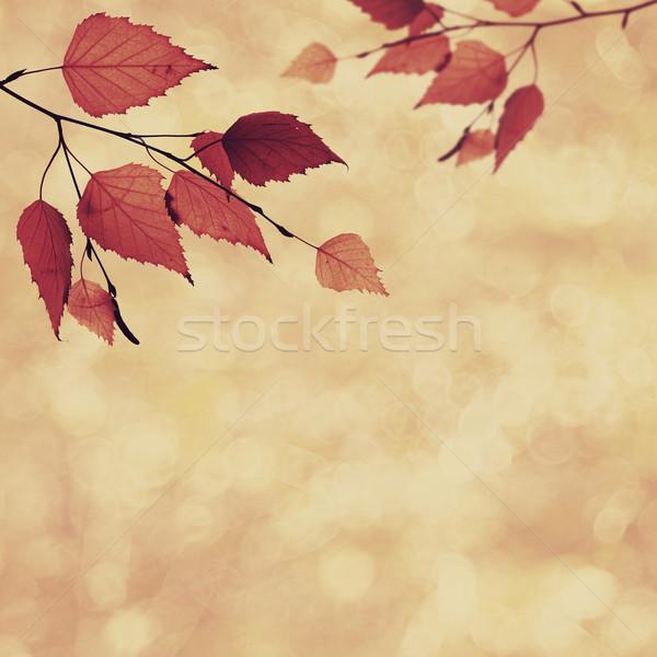 Abstrato fundos beleza bokeh árvore Foto stock © tolokonov