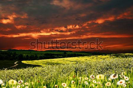 Dramatic sunset over hilly meadow, environmental backgrounds Stock photo © tolokonov
