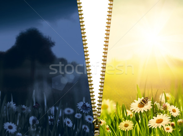 day and night. Natural backgrounds with beauty chamomile flowers Stock photo © tolokonov