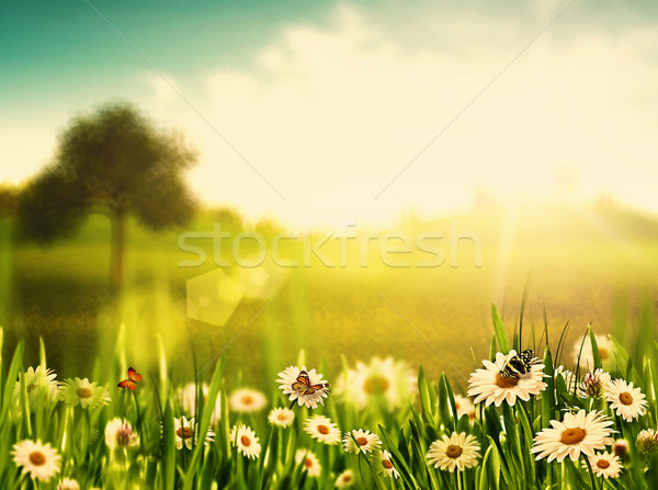 Bright summer afternoon. Natural backgrounds with beauty chamomi Stock photo © tolokonov