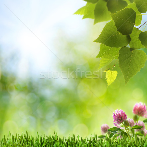 Abstract natural backgrounds with clover flowers and beauty boke Stock photo © tolokonov