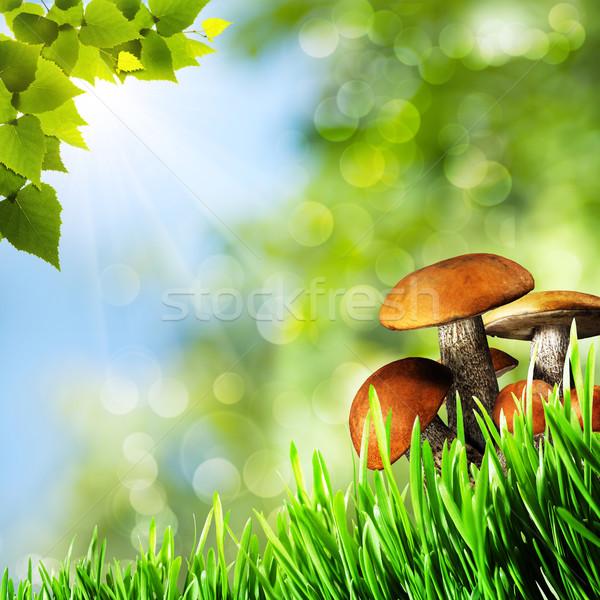 Stockfoto: Abstract · natuurlijke · achtergronden · schoonheid · champignons · voorjaar