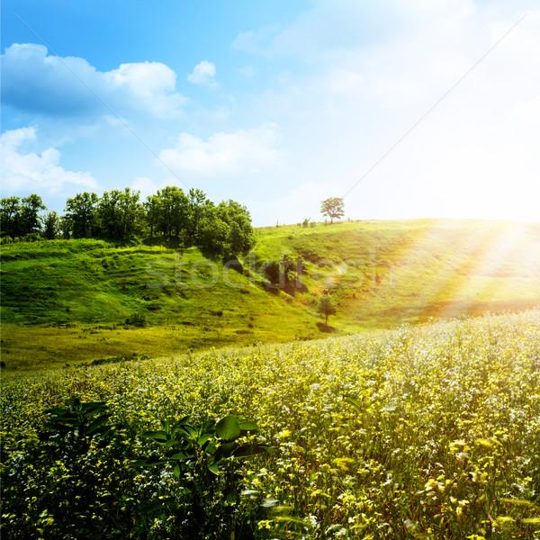明るい 夏 午後 抽象的な 自然 背景 ストックフォト © tolokonov