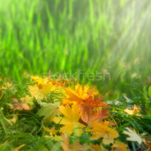 Softness. Autumnal abstract natural backgrounds Stock photo © tolokonov