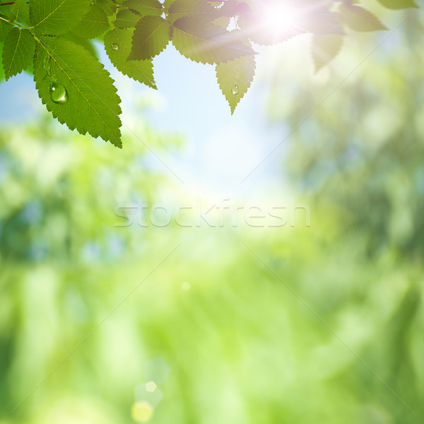 Abstract environmental backgrounds with sun rays and beauty boke Stock photo © tolokonov