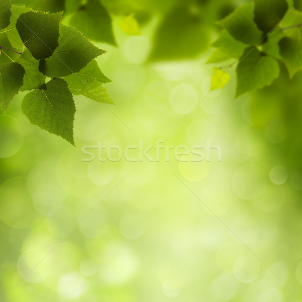 Natural Beauty. Abstract eco backgrounds for your design Stock photo © tolokonov