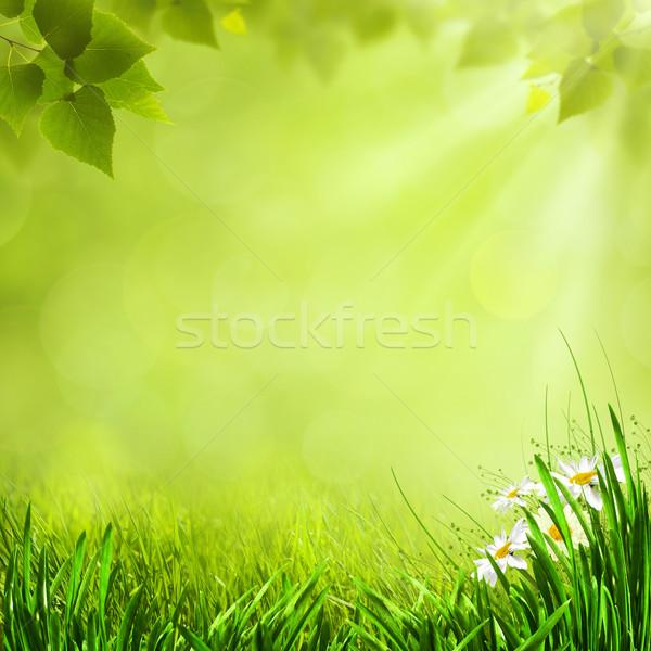 лет природного фоны дизайна природы саду Сток-фото © tolokonov