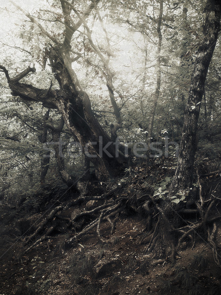 Summer time in the forest, infrared colorized natural background Stock photo © tolokonov