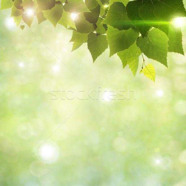 Stock fotó: Napfény · lomb · absztrakt · természetes · hátterek · nyár