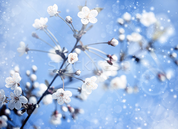Jabłoń kwiaty niebieski optymistyczny streszczenie środowisk Zdjęcia stock © tolokonov