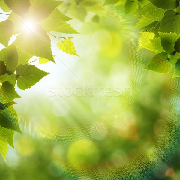 Brillante verano día forestales ambiental fondos Foto stock © tolokonov