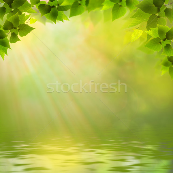 Sunny day on the forest lake, abstract natural backgrounds Stock photo © tolokonov