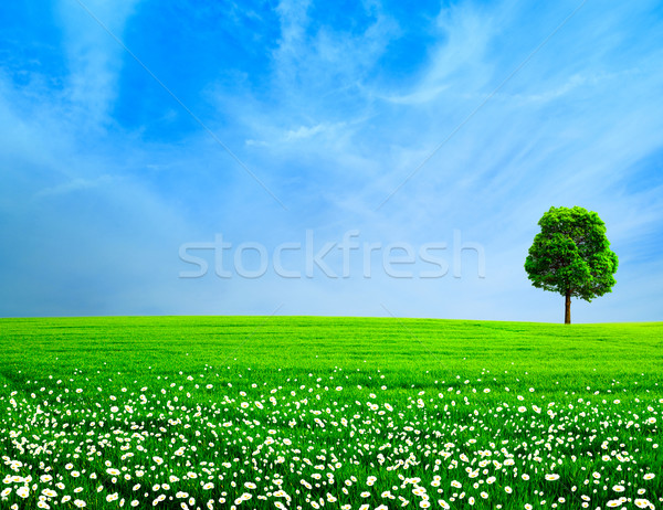 Abstract rural landscape. Green meadow under the blue skies Stock photo © tolokonov