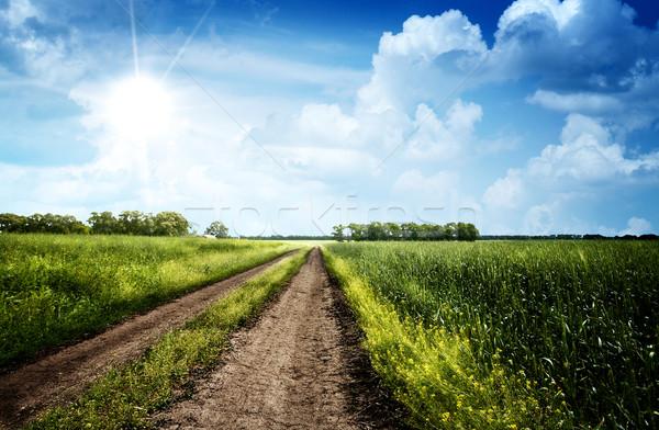 лет день луговой небе трава Сток-фото © tolokonov