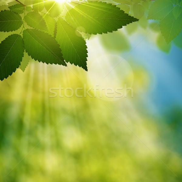 Belleza verano día forestales naturales resumen Foto stock © tolokonov