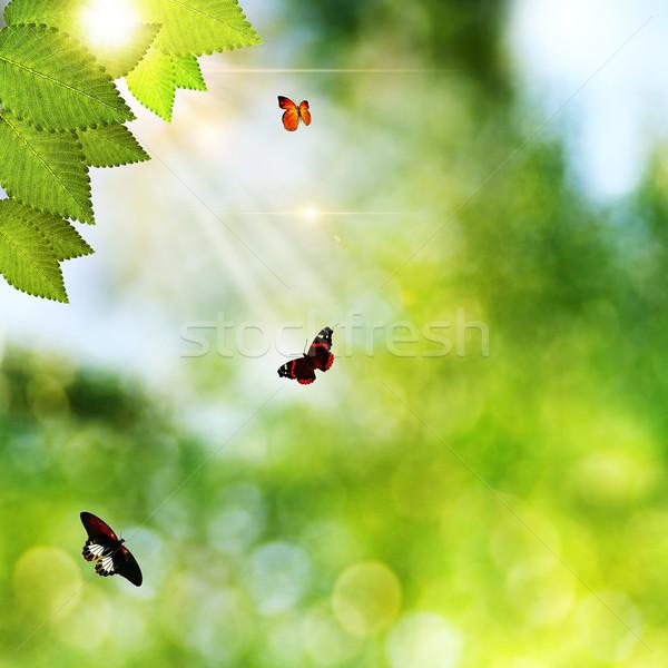 Szépség természetes hátterek zöld fű pillangó tavasz Stock fotó © tolokonov