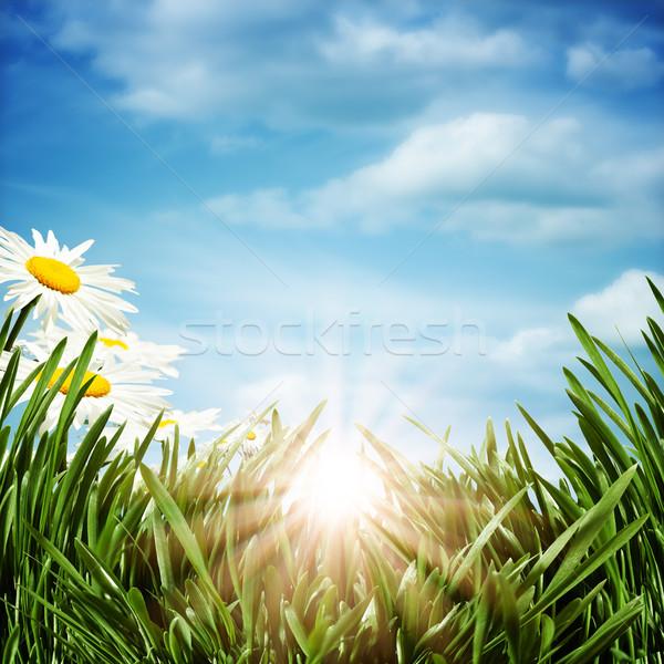 Soyut doğal arka papatya çiçekler çiçek Stok fotoğraf © tolokonov