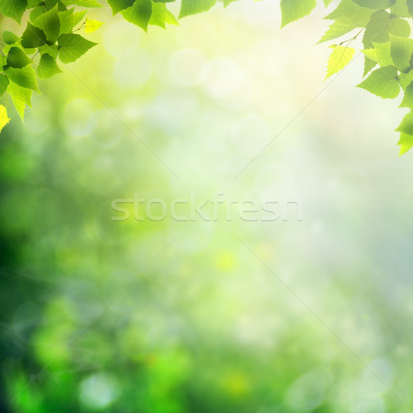 Summer afternoon in the forest, abstract natural backgrounds Stock photo © tolokonov