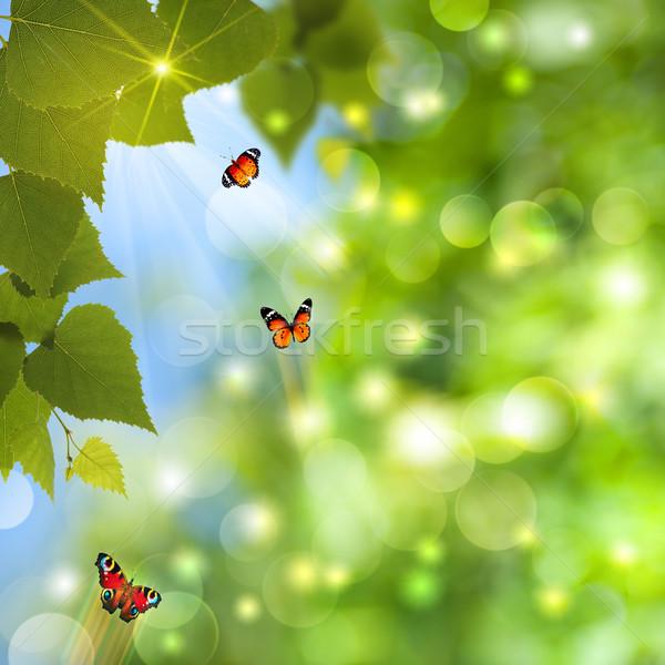 Absztrakt nyár hátterek nap nyaláb pillangó Stock fotó © tolokonov