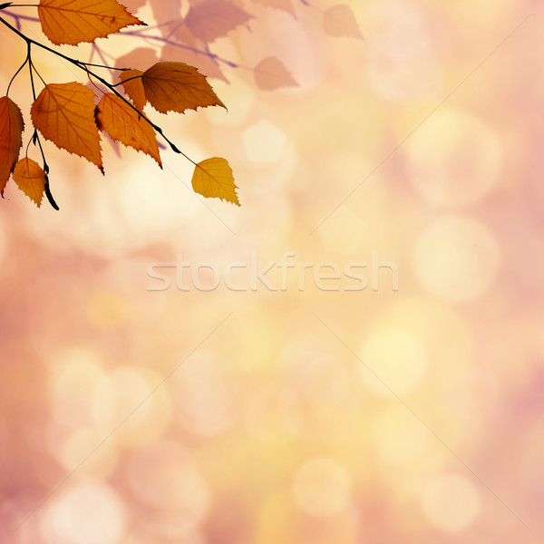 Soyut sonbahar arka güzellik bokeh dizayn Stok fotoğraf © tolokonov