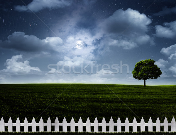 Nightly meadow. Natural summer backgrounds with alone tree on th Stock photo © tolokonov