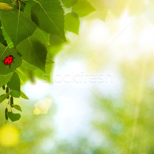 ストックフォト: てんとう虫 · 抽象的な · 環境の · 背景 · デザイン · 草