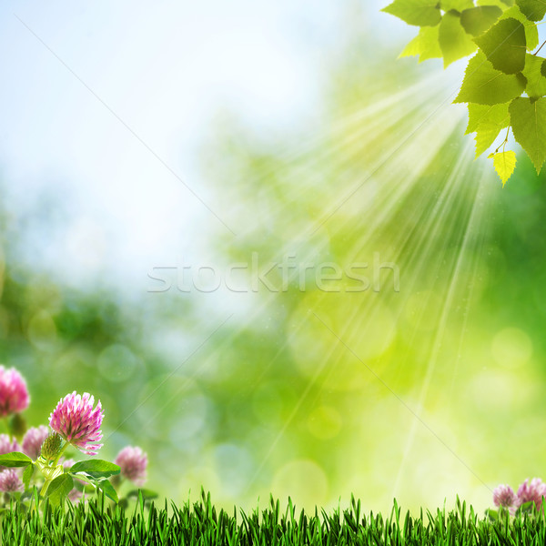 Summer Morning. Abstract natural wallpaper Stock photo © tolokonov