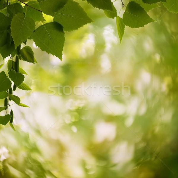 Resumen naturales fondos lente bokeh hoja Foto stock © tolokonov