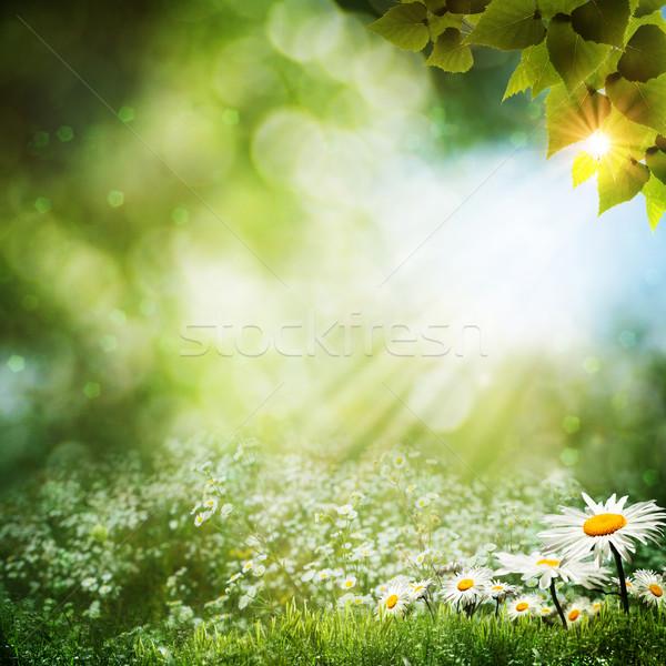 Abstract estate sfondi Daisy fiori primavera Foto d'archivio © tolokonov