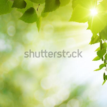 抽象的な 夏 背景 太陽 ビーム 葉 ストックフォト © tolokonov