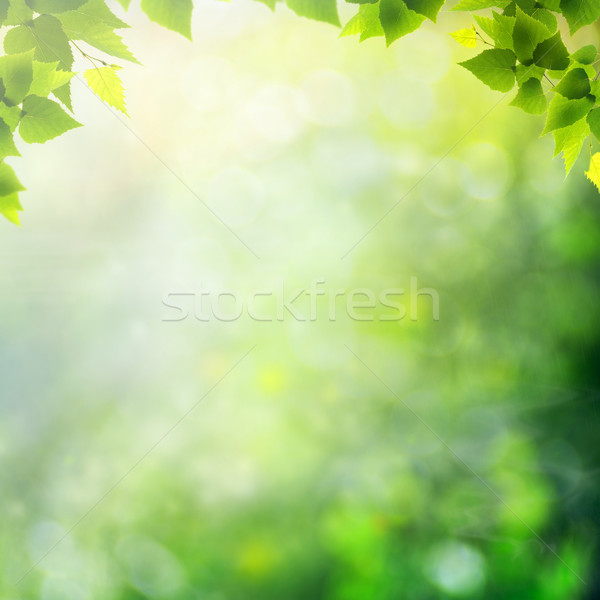Miracle day on the summer meadow. Abstract natural backgrounds Stock photo © tolokonov