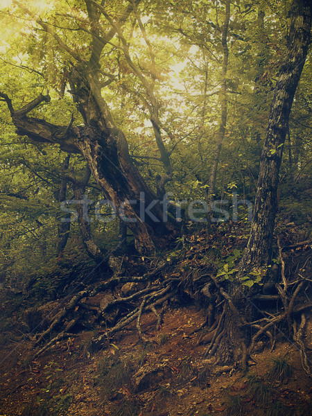 Summer time in the forest, natural backgrounds for your design Stock photo © tolokonov